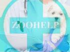 Новое фото  Ветеринарная клиника Zoohelp! 39560829 в Одинцово