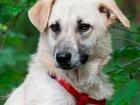 Увидеть фотографию  Собака Бэлла в дар, в добрые руки, 39672755 в Москве