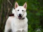 Новое фотографию  Белый пёс Джек в дар, в добрые руки 39686993 в Москве