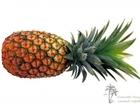 Увидеть foto Ананасы Мы продаем только свежие и спелые ананасы 40580994 в Москве