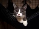 Котик Гек Ищет теплый дом и семью