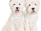 Новое фотографию Стрижка собак Профессиональный тримминг и стрижка собак 54420139 в Москве