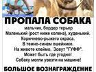 Бордер-терьер фото в Москве