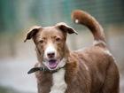 Скачать бесплатно фото  Собака-какао с розовым носом ищет семью, 55452127 в Москве