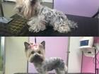 Новое foto  Стрижка собак и кошек в салоне, 55925393 в Москве