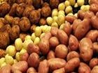 Просмотреть foto  Оптовая компания закупает картофель от 20 тонн, Самовывоз, 56090863 в Ярославле