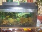 Новое фотографию Собаки и щенки Продам аквариум на 200 литров 56440891 в Москве