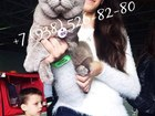 Скачать фото Вязка кошек Вязка с Британским котом (GICH) 57096755 в Москве