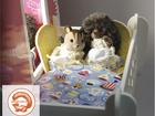Свежее фото Разное Кукольный домик торговой марки БЕЛЬЧИК 57212523 в Москве