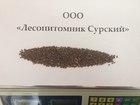 Просмотреть foto Растения Отправим почтой кондиционные семена голубой Ели, 58063468 в Москве