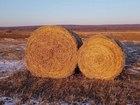 Свежее фото  Рулоны хорошего соевого сена 58239511 в Уссурийске