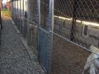 Скачать бесплатно foto  Зоогостиница для собак в Москве 59346521 в Москве
