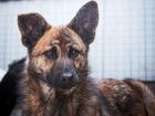 Смотреть фотографию  Красивый щенок-подросток ищет дом! 62155461 в Москве