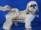Скачать бесплатно фотографию Услуги для животных Стрижка и тримминг собак в Жулебино и Котельниках, Зоосалон Бишон, 63374661 в Москве