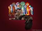 Просмотреть foto  Предлагается кот для вязки 66469210 в Москве