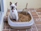 Увидеть foto Разное Наполнитель древесный для туалета животных 67851512 в Москве