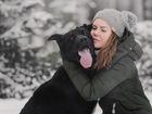 Свежее изображение  Крупный пёс Дамир в добрые руки, 68267223 в Москве
