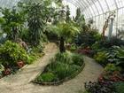 Уникальное изображение  Озеленение интерьера, Зимние сады 68419224 в Москве