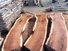 Уникальное фото  Слэб из дерева, лофт, карагач горный, ильм тополь 68867297 в Новороссийске