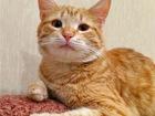 Увидеть фото  Шикарный котик Персик ищет дом! 68953111 в Москве