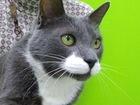 Свежее изображение  Чудесный котик Феликс ищет дом, 69113937 в Москве