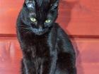 Скачать бесплатно изображение  Разноглазая кошечка Пантера ищет дом, 70554422 в Москве