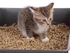Увидеть изображение  ЭКО-наполнитель для котов и грызунов 73647148 в Москве
