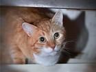 Увидеть foto Отдам даром - приму в дар Ищет свое счастье кот Рыжик, 84370059 в Москве