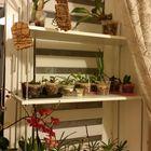 Для комнатных растений полка - стеллаж - подставка на подоконник