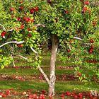 Обрезка плодового сада