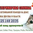 Ветеринарная служба, Вызов на дом, Клиники