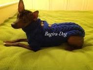 Одежда для Ксоло, Перуанских голых собак и кхс Предлагаем трикотажные изделия дл