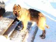 Родион - пес обаятельный, друг замечательный Отдадим в добрые и ответственные ру