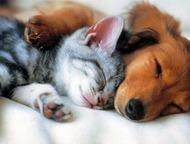 Возьму на передежку животных Вы решили уехать отдохнуть, а Вашего любимца не с к