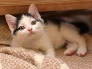 Котенок мальчик в дар, в добрые руки Ищет дом котёнок-мальчик, возраст 6 месяцев