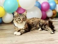 Чудесная кошка Фиша в добрые руки, в дар Москва, МО! Ищет дом невероятная красав