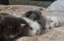 Распродажа декоративных кроликов по низким ценам