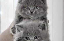 Большой выбор котят