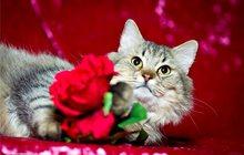 Настоящий котик с характером, Тимошка, в дар