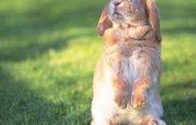 Комбикорм для кроликов Purina (9206)
