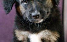 Отличный щенок Пуш, в добрые руки