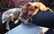 Приючу бездомных кошек и собак