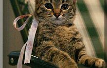 Котенок в дар, Маленькая пантера
