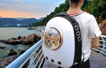 Рюкзак для кота товары для животных