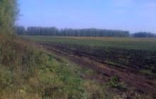 Продам землю сельхозназначения