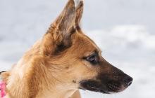 Чудесная собака Чили в добрые руки