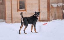 Москва, МО!Чудесный пёс Гриша в добрые руки