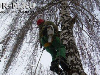 Уникальное foto  Удаление деревьев частями 32552683 в Москве