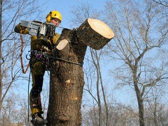 Новое фотографию  Омолаживающая обрезка деревьев 32700863 в Москве