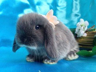 Скачать фотографию  Декоративные карликовые кролики, питомник в Москве 32715885 в Москве